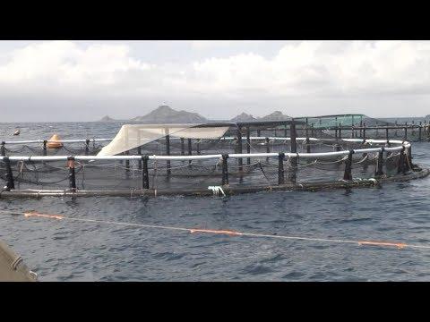 VIDÉO. Carrefour signe une nouvelle Filière Qualité en partenariat avec la ferme marine d'Acquadea en Corse