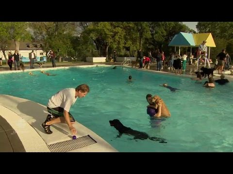 In Calgary Dogs Gets To Enjoy Public Pools Before Closing Down For The Summer That Eric Alper