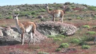 Torres Del Paine, Patagonia, Chile : W Trek