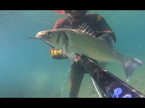 Spearfishing Greece ~ SEA BASS #Xmas edition#