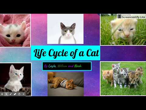 Life Cycle Of A Cat Mp3
