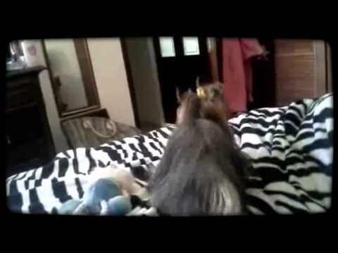 sanny sex dog by Magisto