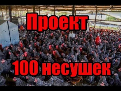 , title : 'Проект 100 несушек!! Выгодно ли держать кур на яйца!! От яйца до курицы!! Часть первая вводная!