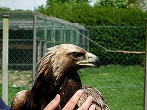 Fieldsports Britain – RSPCA kills an eagle, plus learn to ferret and catch carp – episode 6