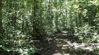 2015-10-11 Jungle near Curtain Fig, Yungaburra