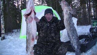 Эти монстры не лезут в лунку! Зимняя рыбалка с ночёвкой.
