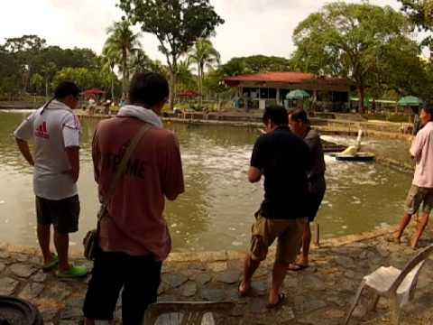 20120923 Pasir Ris Pond Fishing 2