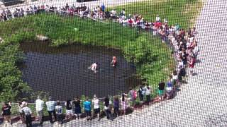 Pinkerton Academy - Swimming In The Pond Behind The Volk Building