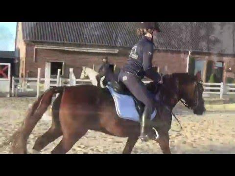 1/2 Das Ponyshowteam bei Holger Hetzel in Goch - Vorbereitungen