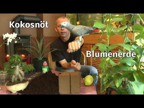 Ikea, Kokosnöt Kokoserde Kokoshum Produktvorstellung vom Gärtner