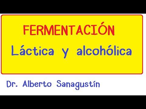 Fermentación Láctica y Alcohólica  #Bioquímica