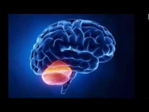 Integrating The Lizard Brain & Mammalian Brain - Wise As A Serpent Gentle As A Dove