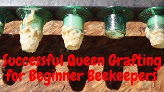 🔵Grafting Queens for Beginners! Queen Rearing series | Part 2