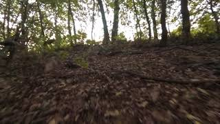 THE FOREST - FPV REELSTEADY