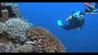 preview picture of video 'Tauchen Layang Layang. Malaysien Unterwasser-Video: Hammerhaie, Manta Rochen, Delphine'