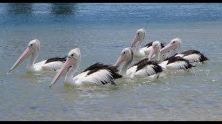 preview picture of video 'La costa de Sidney a Melbourne'