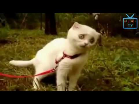 Funny Animal Mating - Funny Cat Reacts To Horror Things