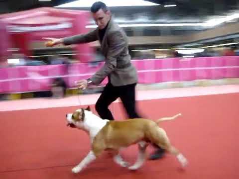 Hades de cans juansa - exposición internacional gerona 2012