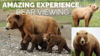Bear Viewing and Scenic Flight in Alaska! Adventure of a lifetime!