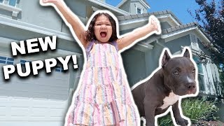 SURPRISING MIZO WITH A NEW PUPPY!