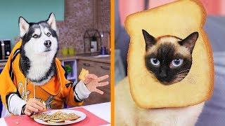 22 Eğlenceli Evcil Hayvan Şakası ve Hilesi