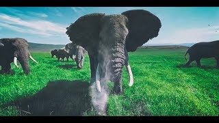Смотреть онлайн В окружение слонов и на природе