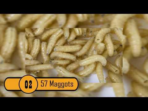 Ang bata ay may malaking worm