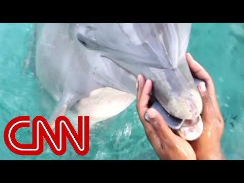 Dolphin Ecards Dolphin retrieves phone dropped in ocean CNNs..