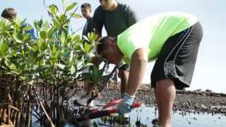 preview picture of video 'Punahou Seniors Work at He'eia Fishpond (Punavision - December 2013)'
