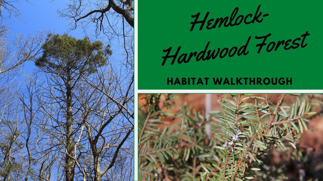 Habitats: Hemlock-Hardwood Forest