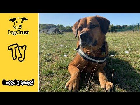 Ty the Crossbreed Loves Learning New Tricks | Dogs Trust Salisbury