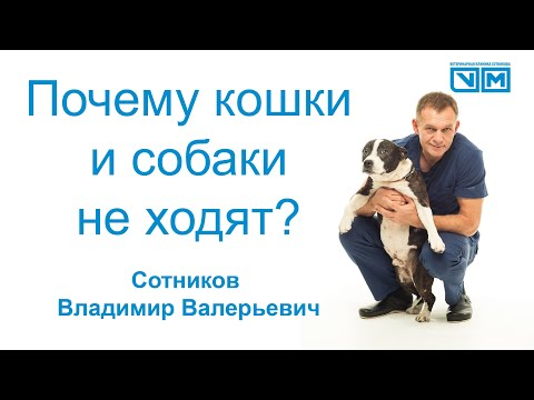 Если у собаки или кошки не ходят лапки что делать? Как лечить? Как найти врача?