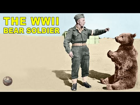 Wojtek: Poland's Bear Soldier Who Fought Hitler's Nazis