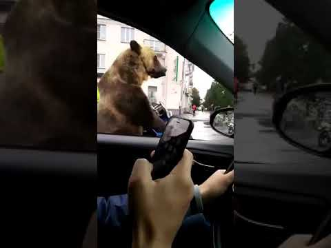 Russian Man Plays Trumpet In Traffic