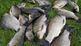 Места для ловли рыбы под киевом