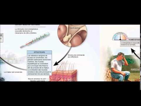 Les normes de contrôle de la pression artérielle quotidienne
