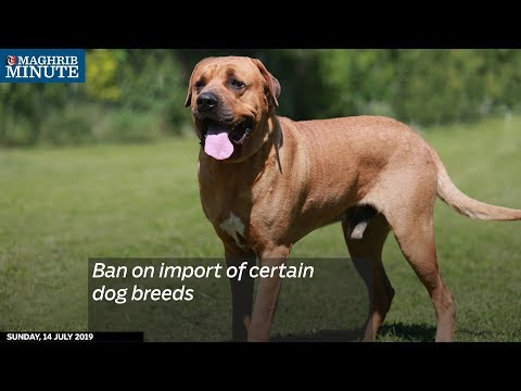Ban on import of certain dog breeds