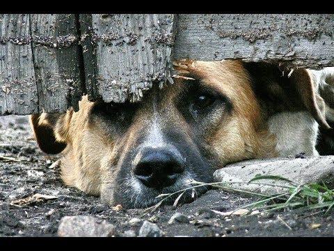В Хабаровске оглашен Приговор по уголовному делу о жестоком обращении с животными