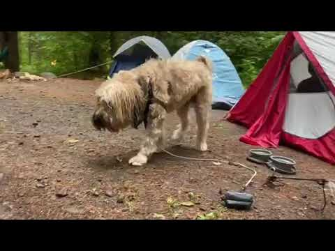 Video Of Catskill/Kenneth L Wilson Campground, NY