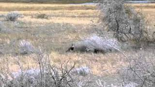 Nice video of some of the fauna at the Reserve