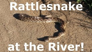 Rattlesnake At The San Diego River - Fishing With Rodney Marquez