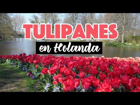 Keukenhof: el jardín de tulipanes en Holanda