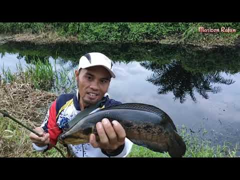 Najur di perbatasan dapat ikan Pelompong besar