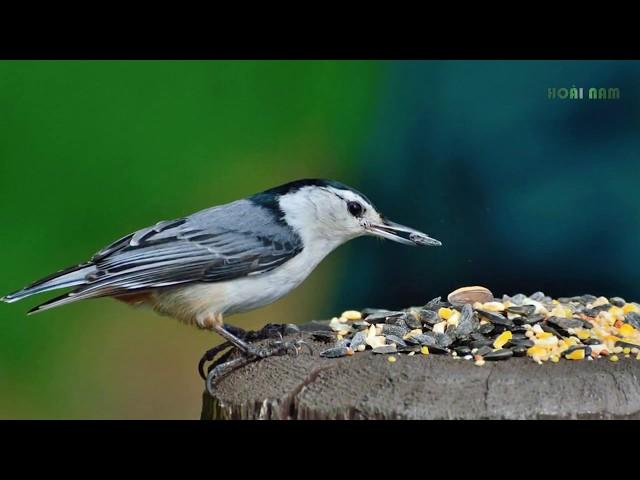 Điềm báo Chim sa – Cá nhảy