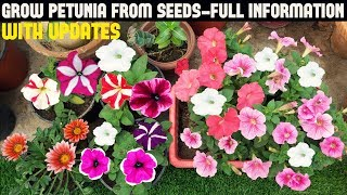 How To Grow Petunia From Seeds (With Full Updates)