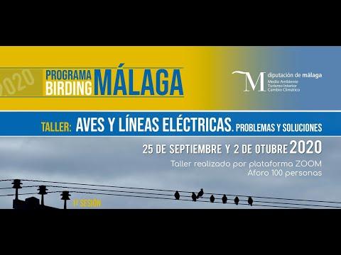 Taller Birding Málaga: aves y tendidos eléctricos. Primera sesión25 de septiembre 2020