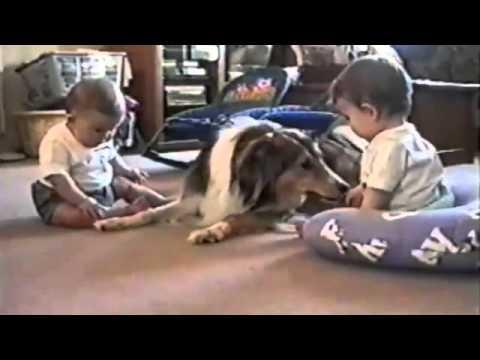 Собаки и дети, очень смешная подборка взаимодействия детей с котами!