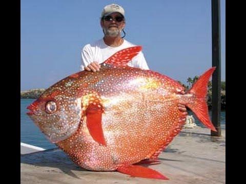 La pesca in Rhodes unescursione
