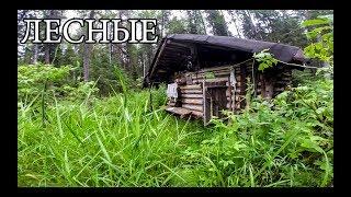 ЛЕСНАЯ ИЗБА (20 ЛЕТ CПУСТЯ) | новая печь и крыша, рыбалка на дикой реке (+18)