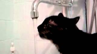 Сосущая кошка пьет водичку )))